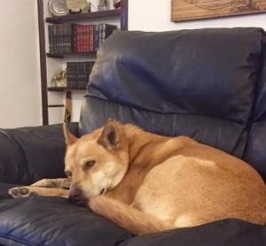 Pictured: actual sad puppy