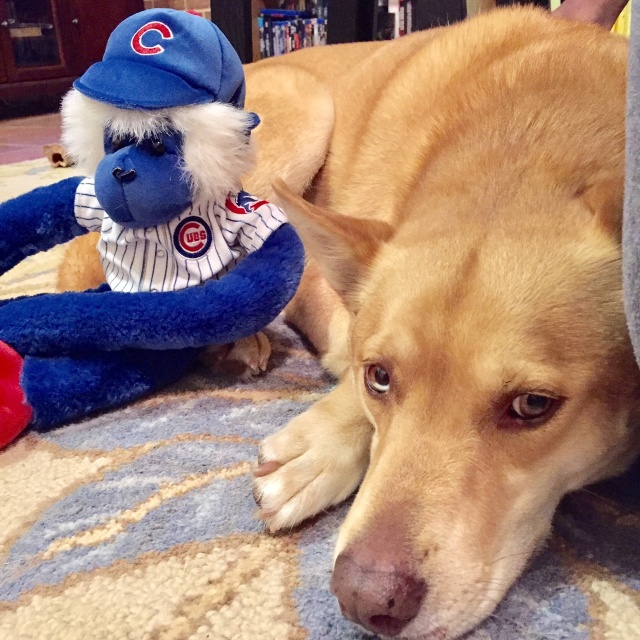 You would think a Cubs win would alleviate puppy-related sadness...